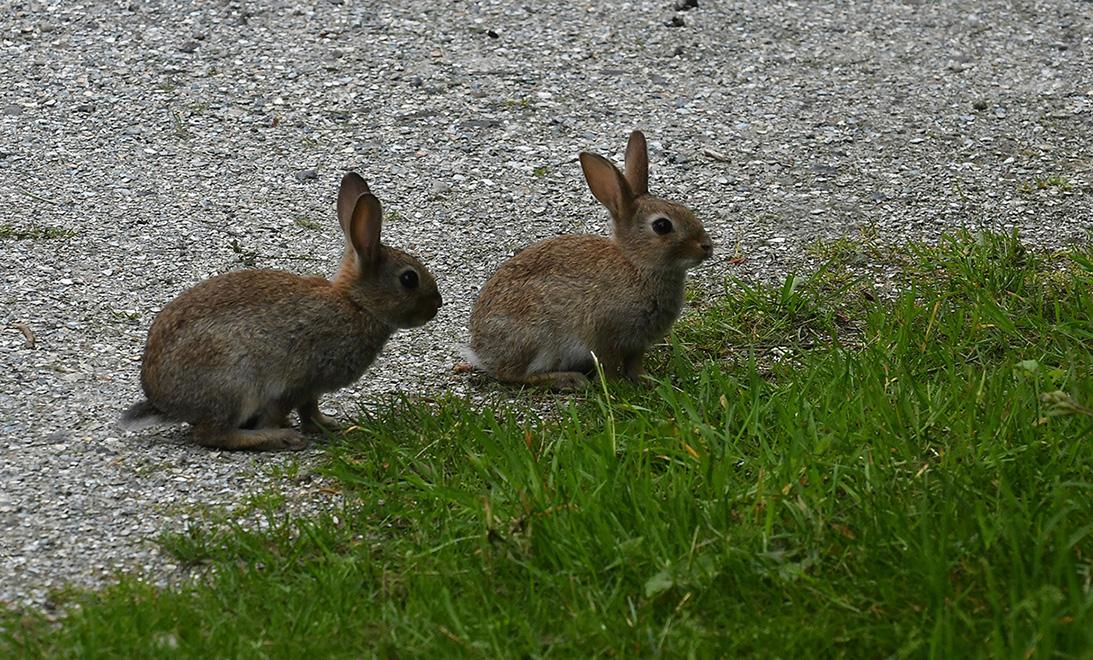 7 foto 7 konijntjes texel