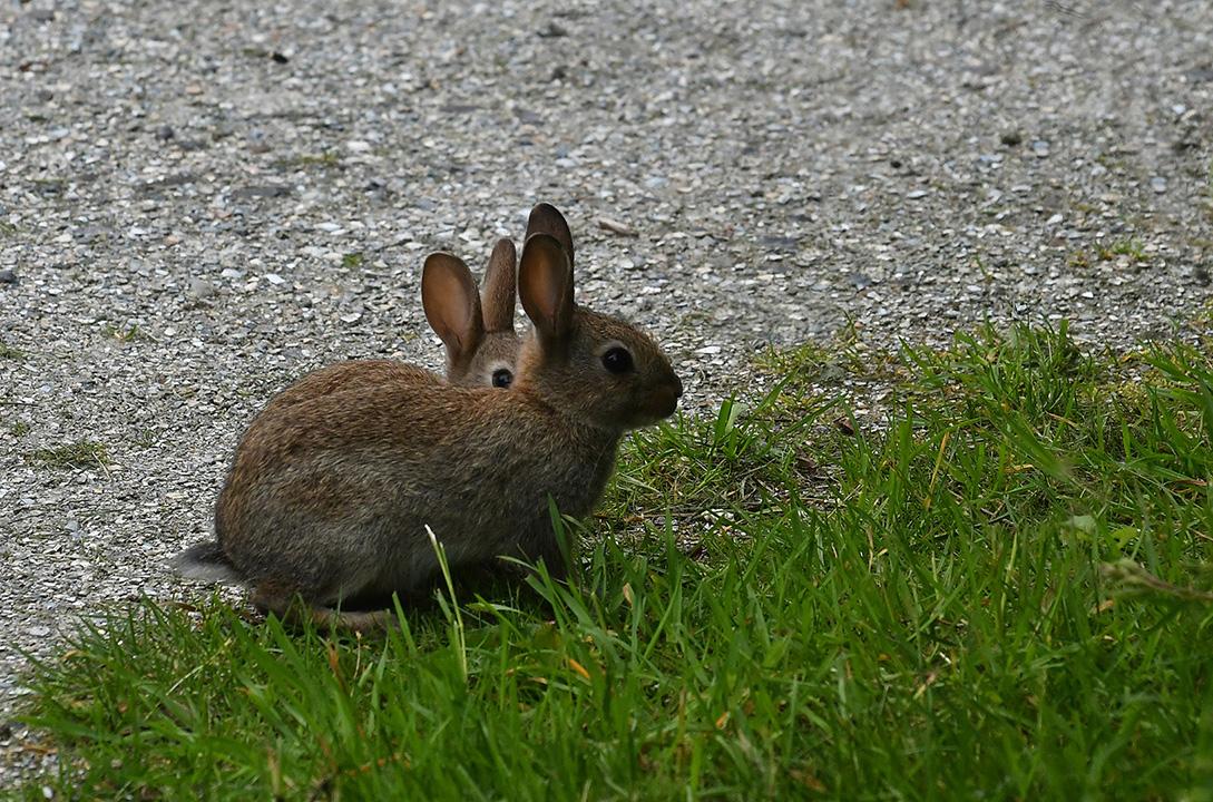 8 foto 8 konijntjes texel