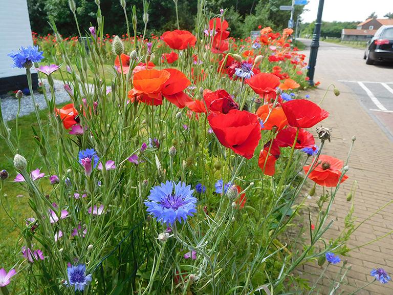 1 foto 1 Wilde bloemen Klaproos en korenbloem