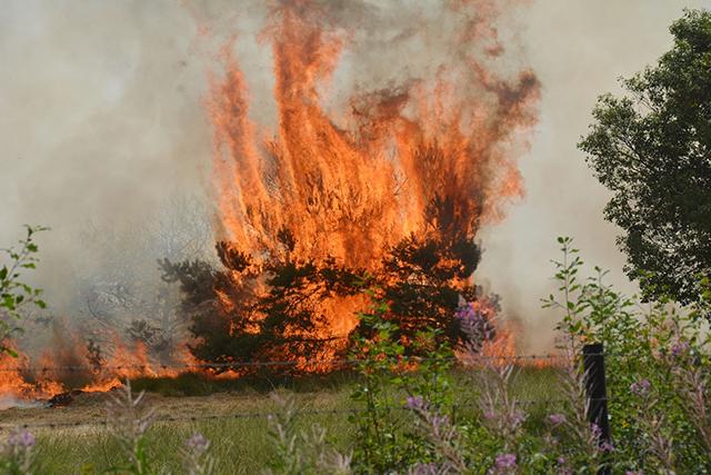bosbrand hoge veluwe juli 2018 a