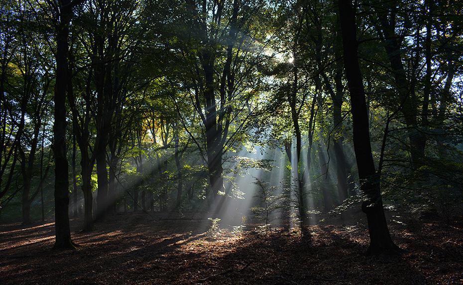 Hoe meer houtaanwas, hoe gunstiger voor het klimaat - Foto: ©Louis Fraanje