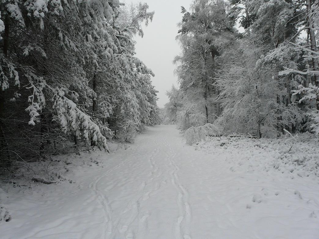 Winter in het bos Louis Fraanje