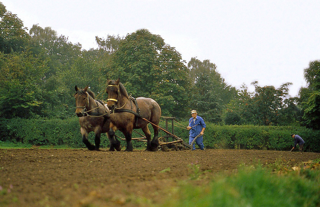 Ploegende paarden - 1 - ©Louis Fraanje