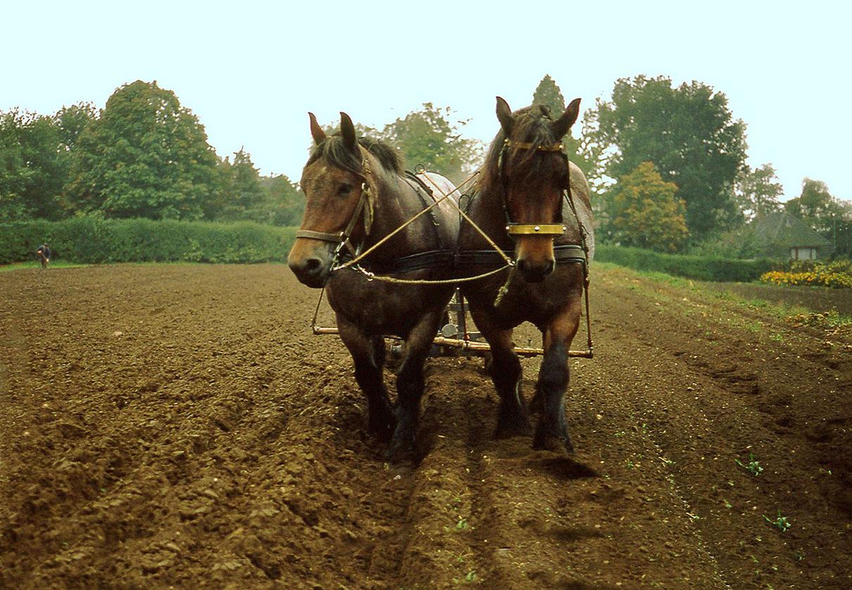 Ploegende paarden Foto 2 - Foto: ©Louis Fraanje