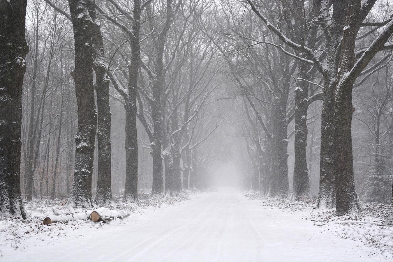 Een echte winter met sneeuw dat is natuurlijk het allermooiste - Foto: ©Louis Fraanje