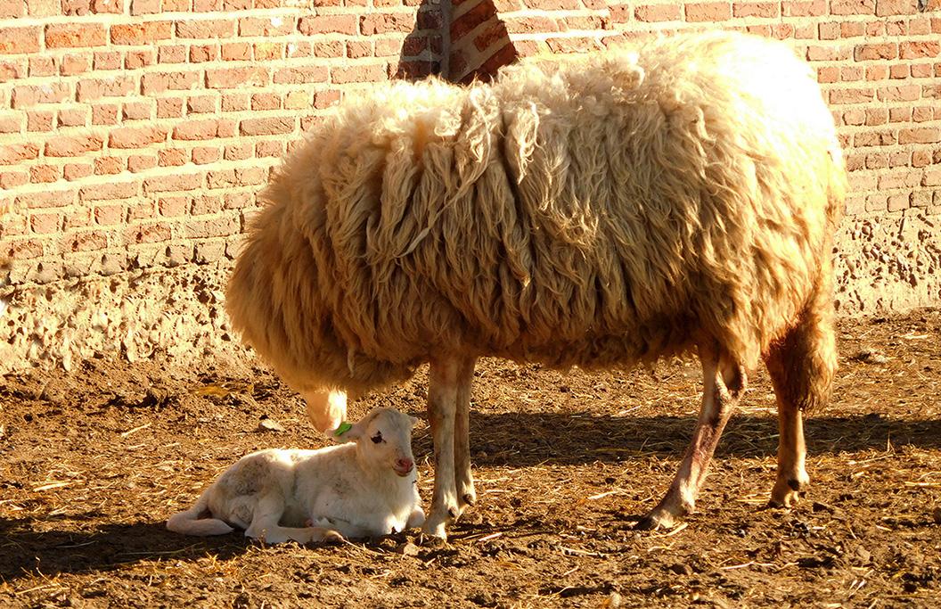 Een bezorgde moeder met haar kleine boreling - Foto: ©Fransien Fraanje