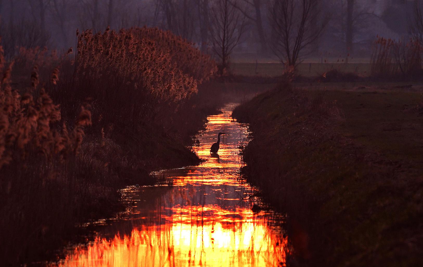 Even later zagen we een vissende reiger in de kleurrijke sloot - Foto: ©Louis Fraanje