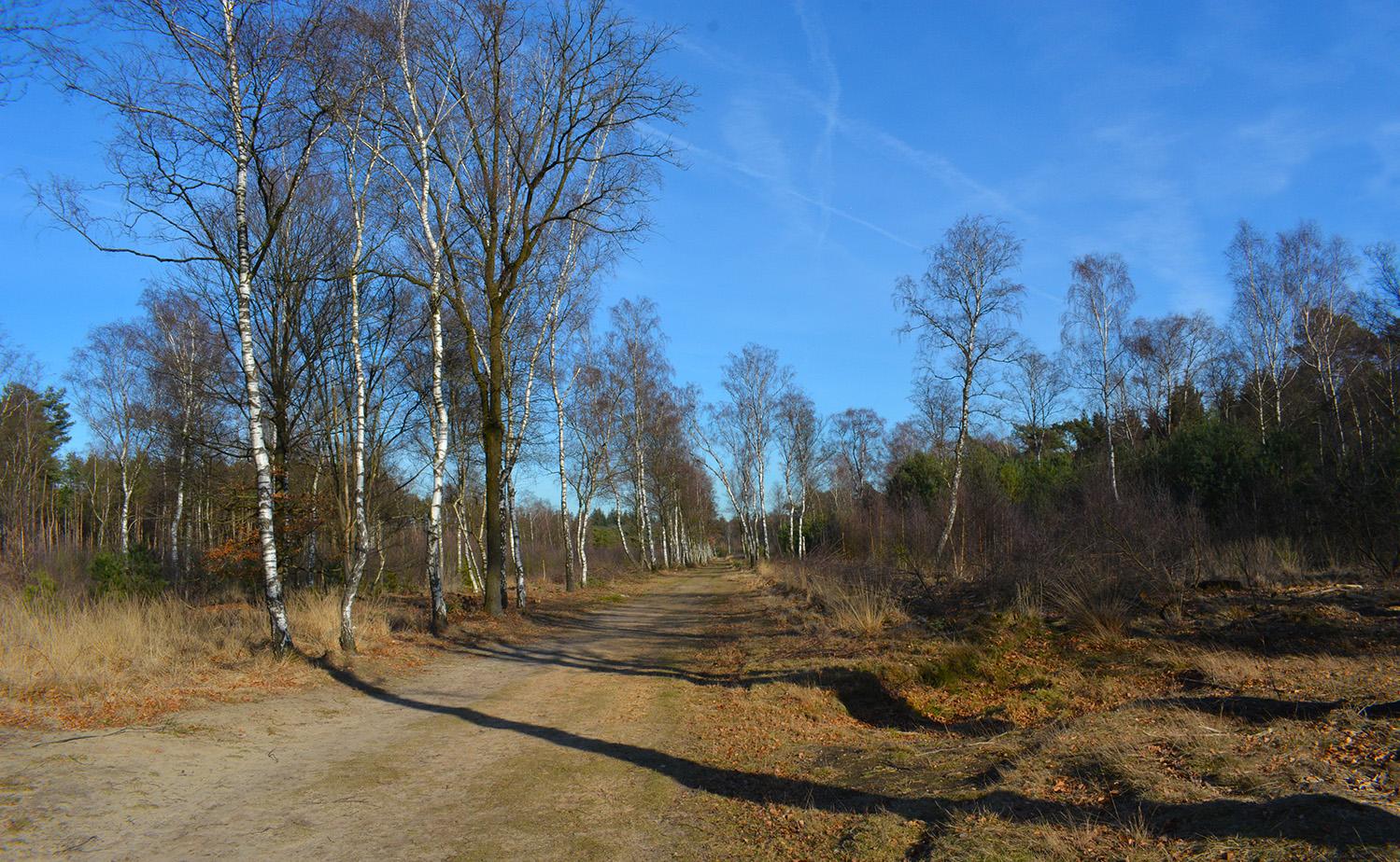 Mooi bospad met berken in het bos bij de Ginkel - Foto: © Louis Fraanje