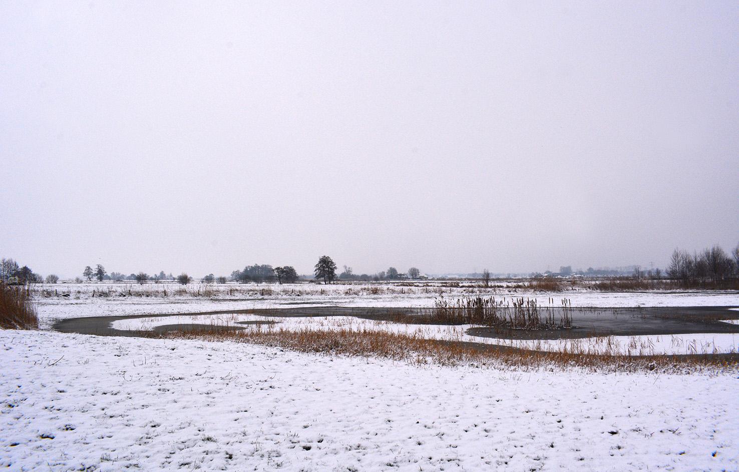 Hier en daar liggen een aantal plassen in het Rauwe Veld – Foto: ©Louis Fraanje