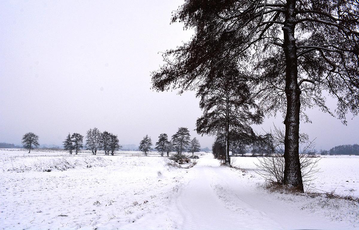 Stil en verlaten ligt het besneeuwde Rauwe Veld erbij in de winter - Foto: ©Louis Fraanje