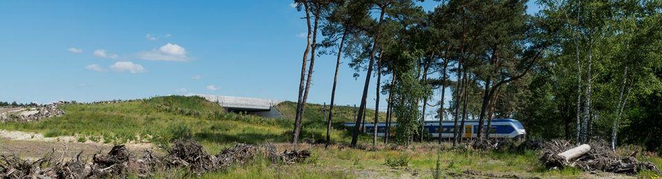 """Natuurbrug """"Asselsche Heide"""" een prachtige verbinding voor de dieren op de Veluwe - Foto: ©ProRail"""