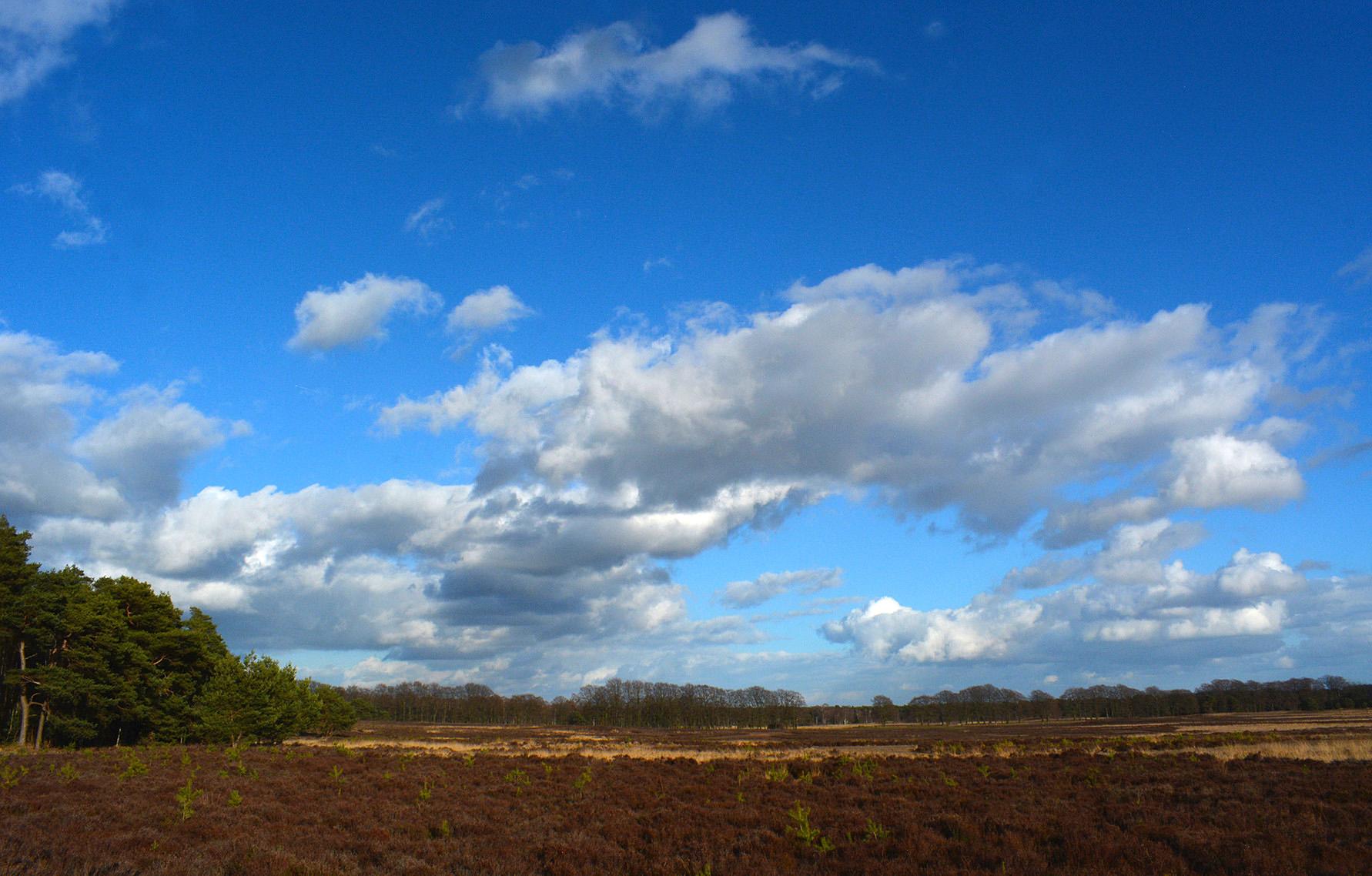 Heen en weer banjeren over het grote open terrein - Foto: ©Louis Fraanje