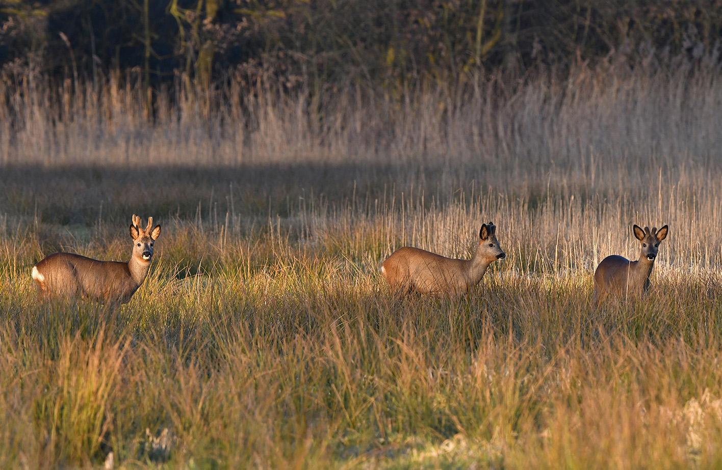 De 6-ender houdt de tweeling op afstand - Foto: ©Louis Fraanje