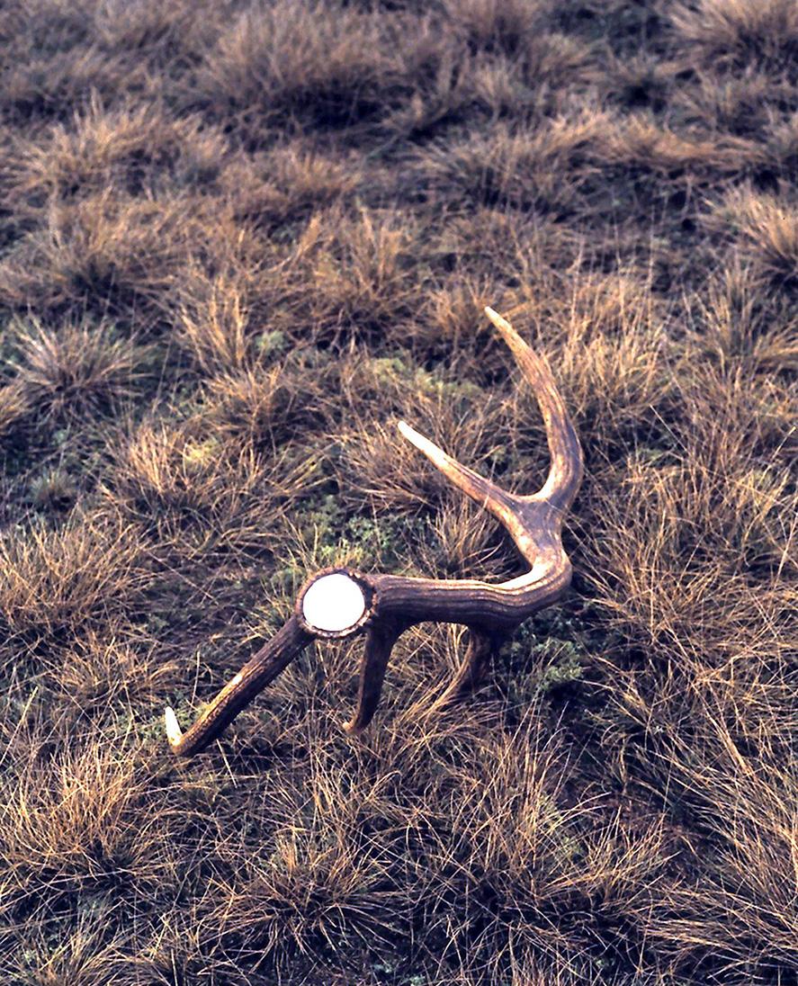 De stang in het open veld – Foto: ©Anja Arentzen