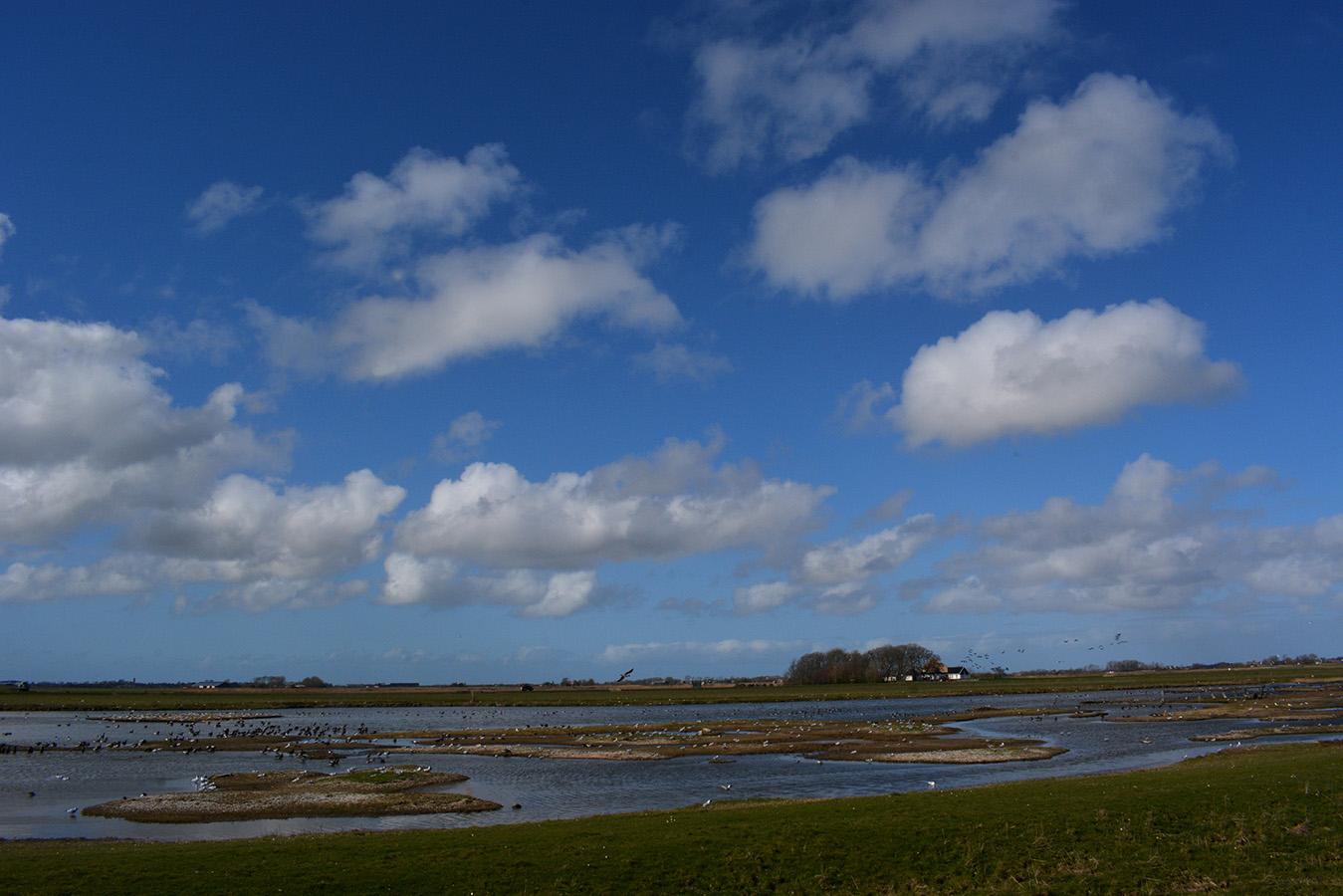 Aan de oostkant van het eiland zijn veel plekken waar je vogels kunt zien – Foto: ©Fransien Fraanje