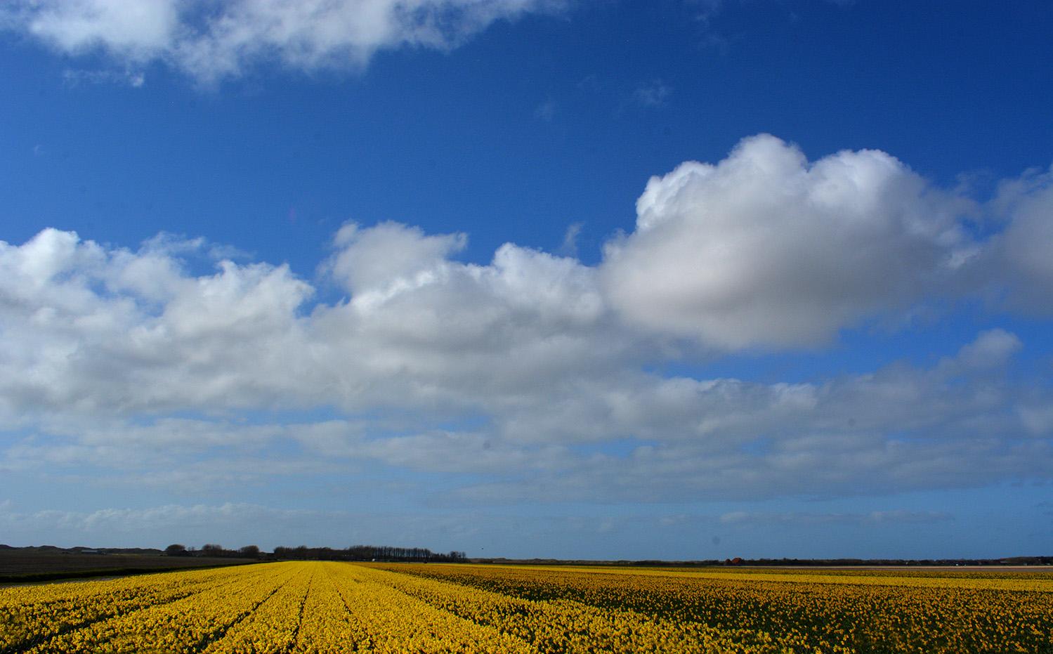Overal op het eiland kom je deze kleurige velden tegen – Foto: ©Fransien Fraanje