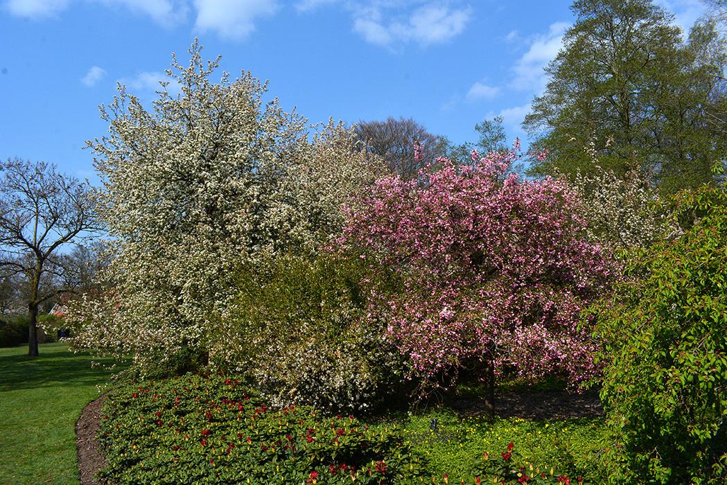 Een kleurrijke tuin van groen naar rose en dan wit. Foto: ©Louis Fraanje