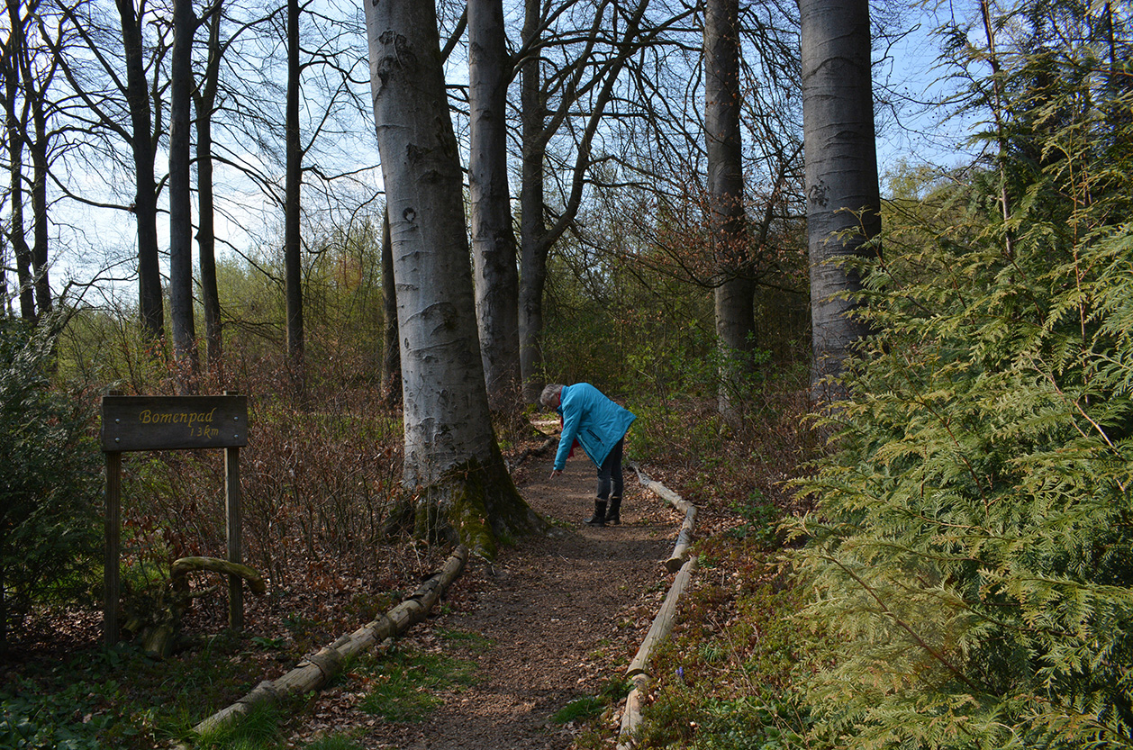 Het bomenpad is leuk om te doen, je leert de verschillende soorten kennen - Foto: © Louis Fraanje