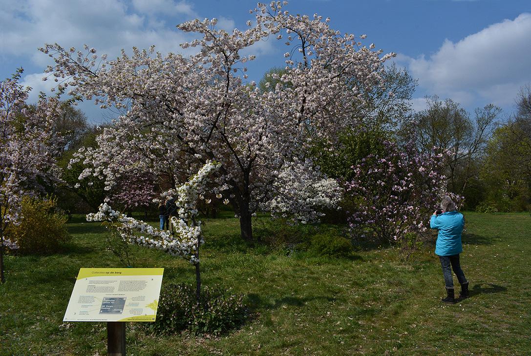 Overal bloeiende bomen en struiken - Foto: ©Louis Fraanje