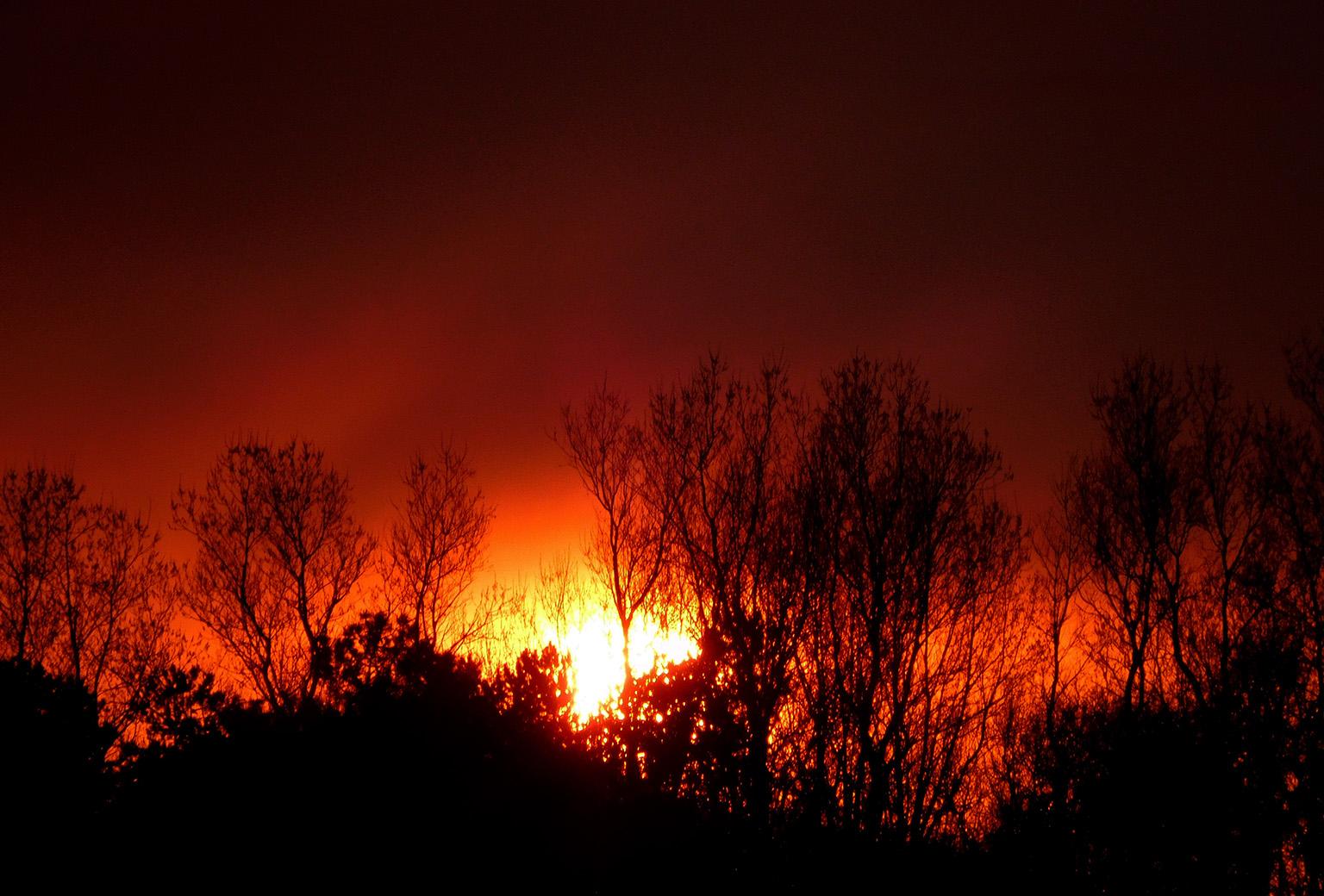 Het lijkt er wel op of het hele bos in brand staat – Foto: ©Fransien Fraanje