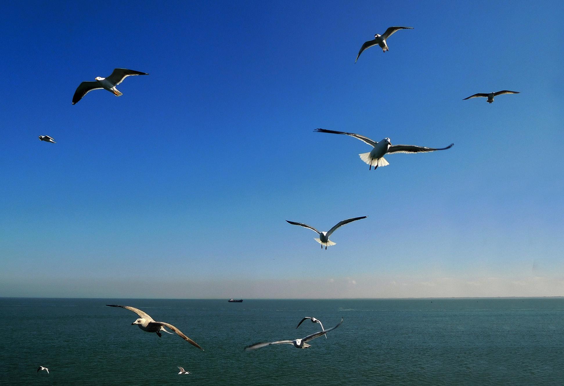 Tientallen meeuwen die rondom de veerboot zweven op de zeewind – Foto: ©Fransien Fraanje