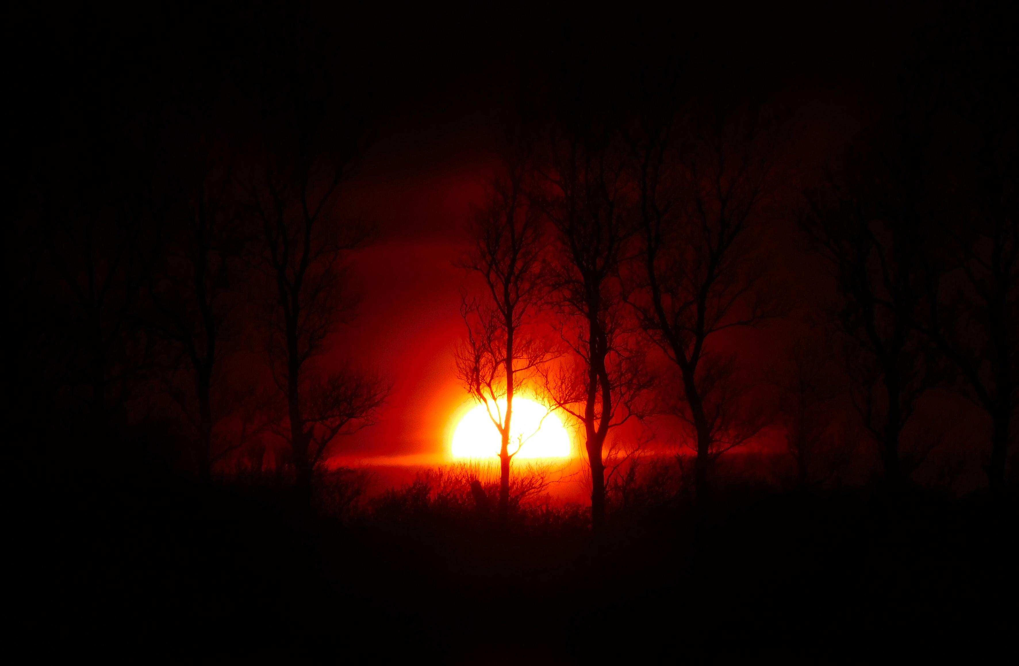 De ondergaande zon die achter de bomen wegzakt, heeft iets mystieks – Foto: ©Fransien Fraanje