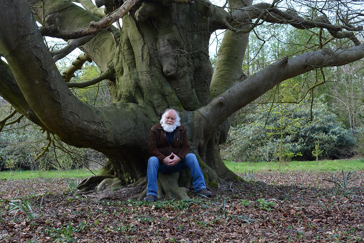 Deze beuk bestaat uit meerdere bomen die met elkaar zijn vergroeid - Foto: ©Fransien Fraanje