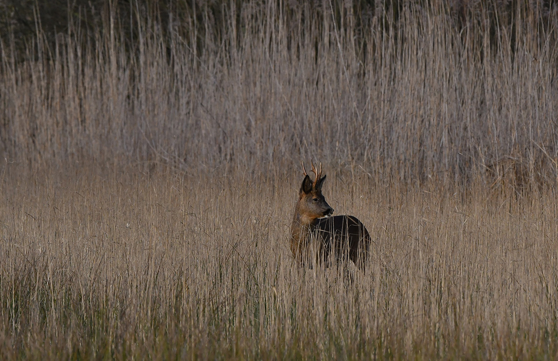 Pollux II schudt zich nog eens uit en kijkt heel triomfantelijk om zich heen – Foto: ©Louis Fraanje