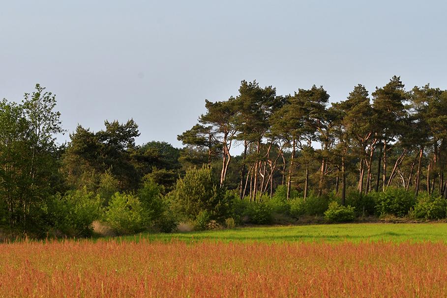 Ergens diep verscholen in de Veluwse bossen ligt een mooie wildweide – Foto: ©Louis Fraanje