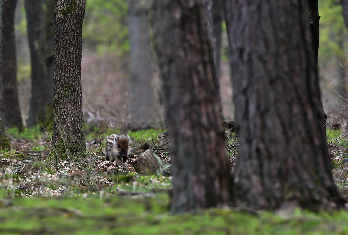 Zo'n klein beestje valt bijna niet op tussen het dode hout – Foto: ©Louis Fraanje