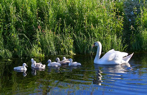 Zo... eerst eventjes kijken of alle zeven kleintjes er zijn – Foto: ©Louis Fraanje