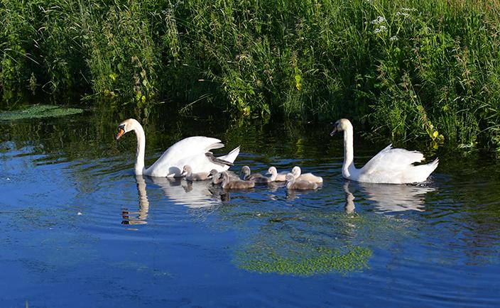 Het hele gezin is compleet dus de zwemles kan beginnen – Foto: ©Louis Fraanje