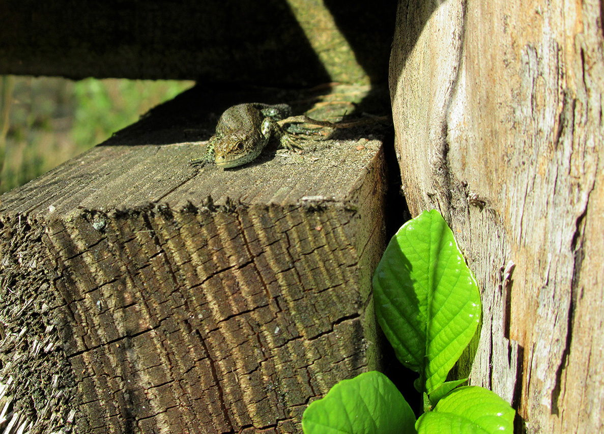 En... net onder de rand van het plankier er eentje gevonden – Foto: ©Fransien Fraanje