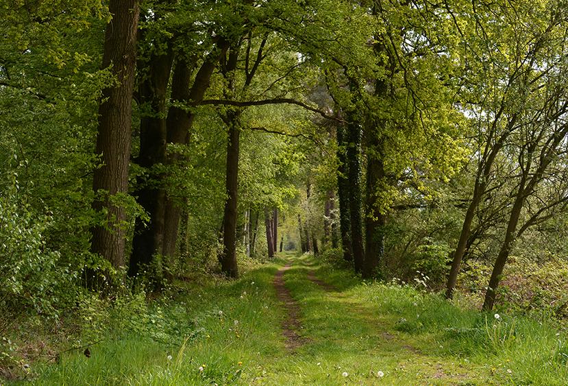 Zomaar even genieten bij een bospad op de Veluwe – Foto: ©Louis Fraanje