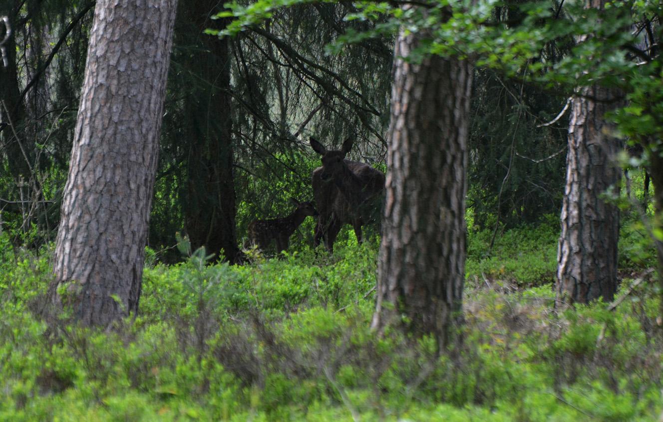Een prachtig beeld in het groene voorjaarsbos – Foto: ©Florus van den Berg