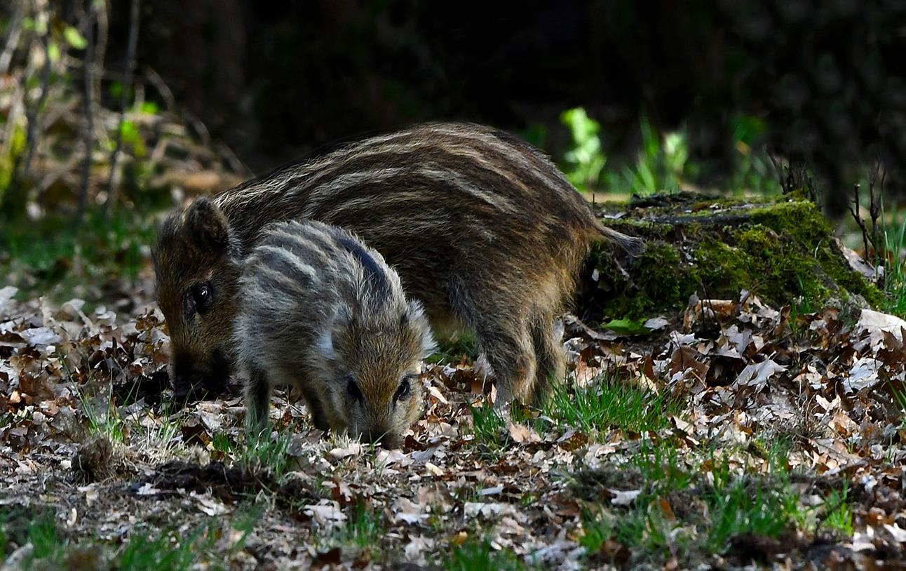 Tjonge... wat een klein beestje is het toch - Foto: ©Louis Fraanje