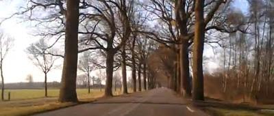 De N319: Provincie Gelderland wil 343 bomen kappen waarvan 320 gezonde exemplaren!!