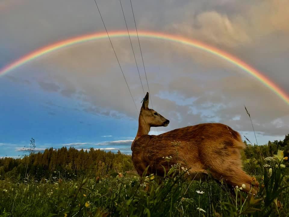 Schneewittchen met op de achtergrond een adembenemende regenboog aan de avondhemel - Foto: ©Susa Bobke