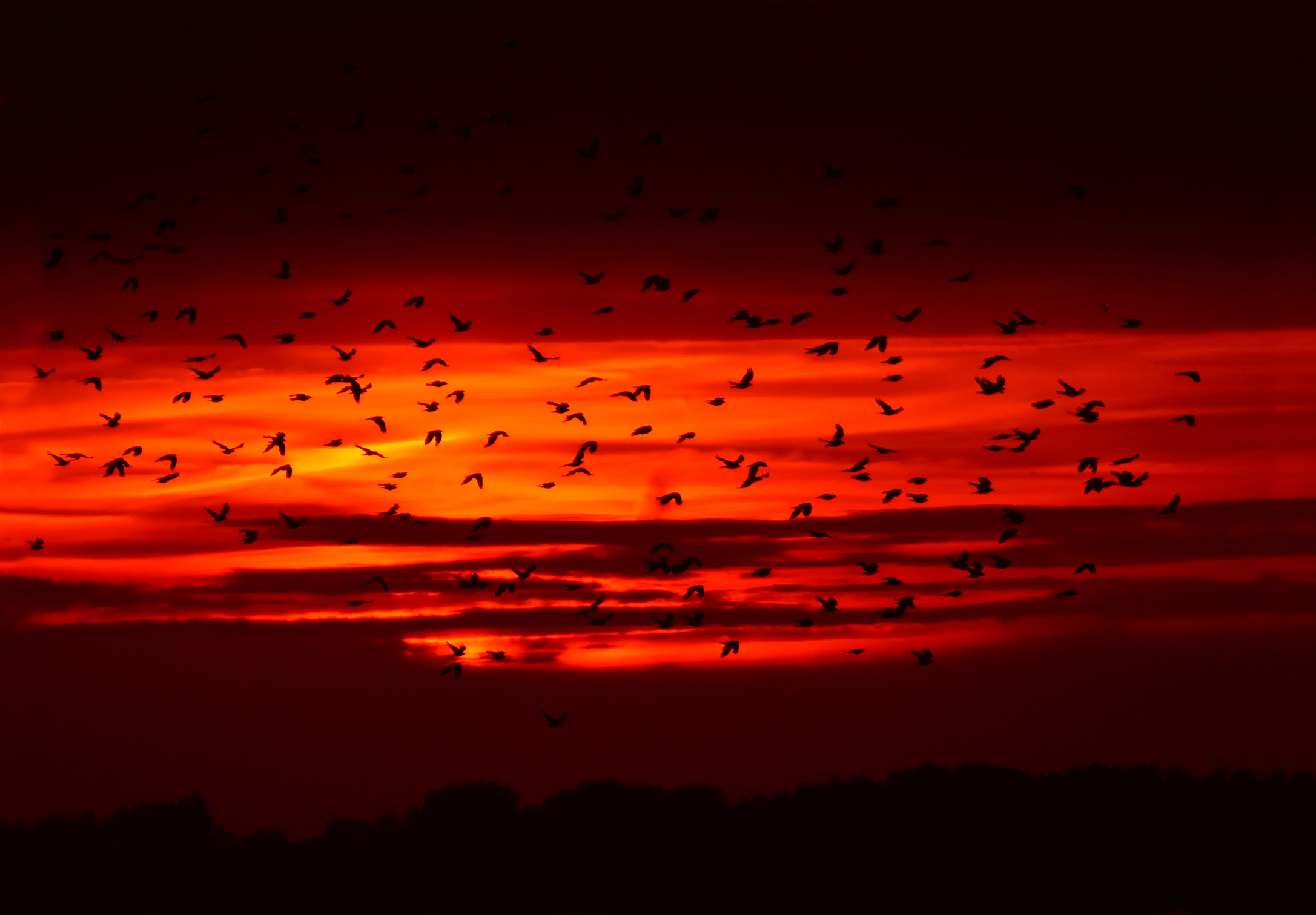 Zondag 9 juni 2019 tijdens het avondrood komt er een hele zwerm vogels langs vliegen - Foto: ©Louis Fraanje