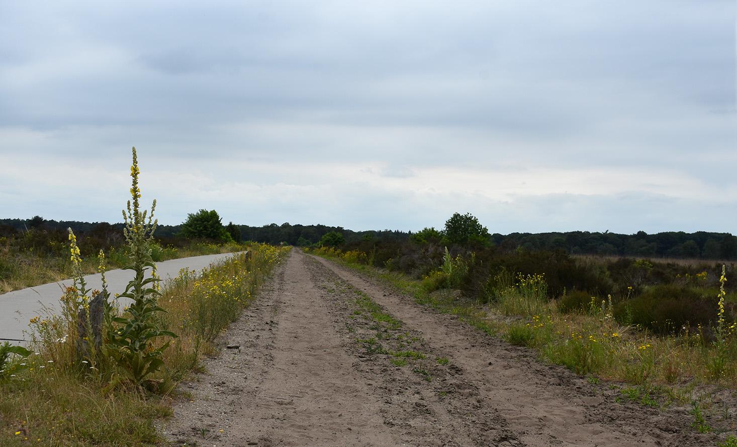 De eeuwenoude Houtbeekweg tussen Kootwijk en Stroe -Foto: ©Louis Fraanje
