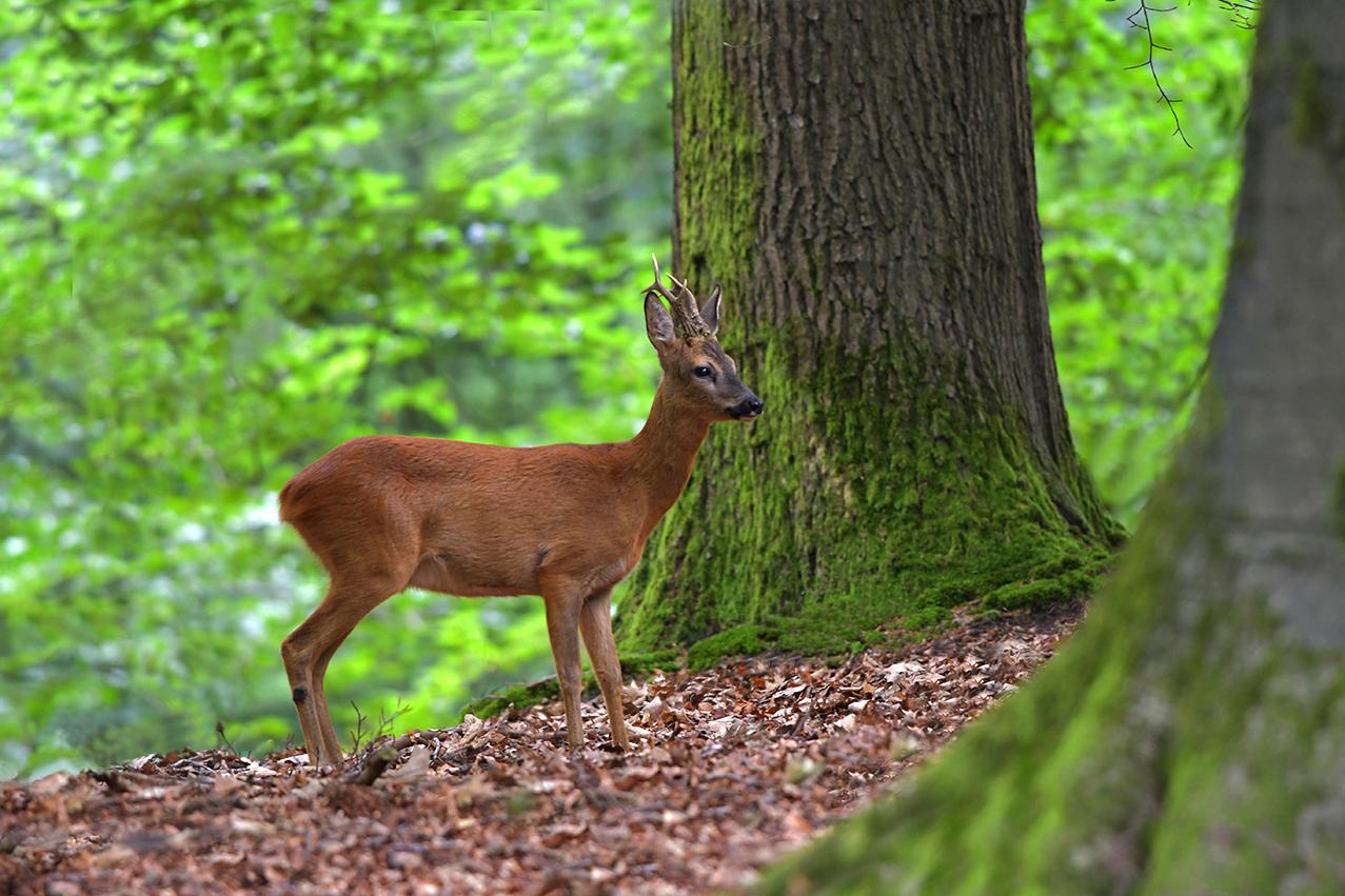 Uiteindelijk staat hij dan vlakbij de oude bomen – Foto: ©Louis Fraanje