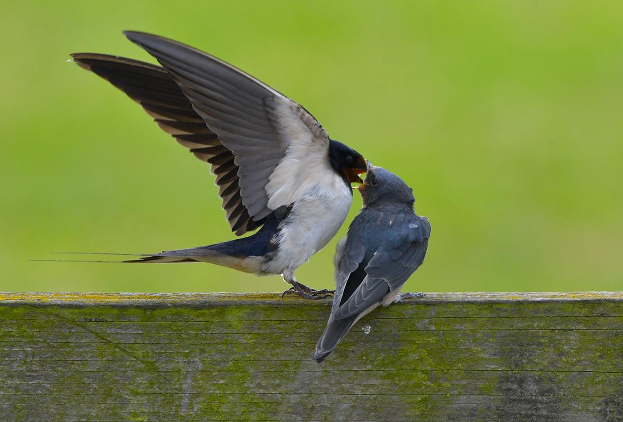 En voor dat je het goed en wel in de gaten hebt, vliegt ze weer weg – Foto: ©Louis Fraanje