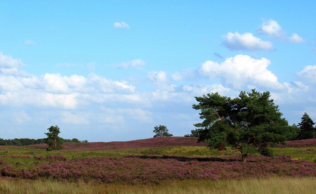 Glooiende heuvels met bloeiende heide en vliegdennen - Foto: ©Fransien Fraanje