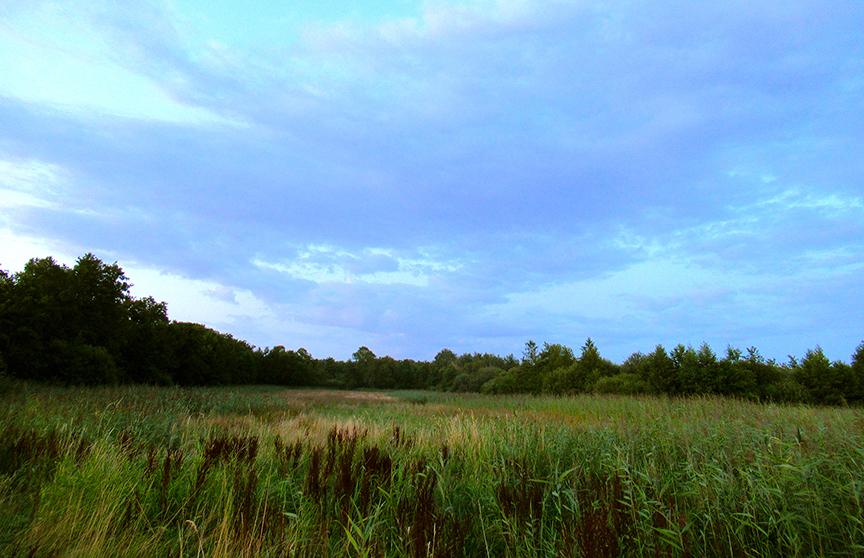 In het 'Rauwe Veld' stond het gras, riet en wat niet allemaal inmiddels 'torenhoog'! - Foto: – Foto: ©Louis Fraanje