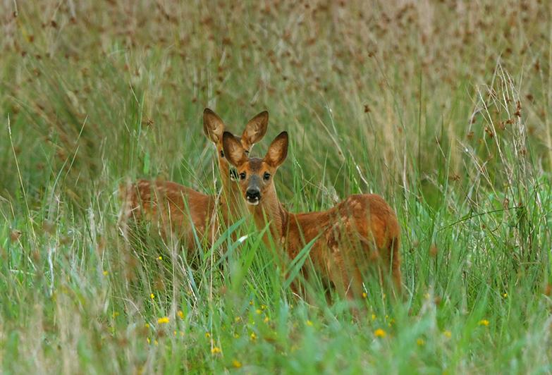 Je hebt er natuurlijk altijd bij, die met hun neus... en oor vooraan willen staan - Foto: ©Louis Fraanje