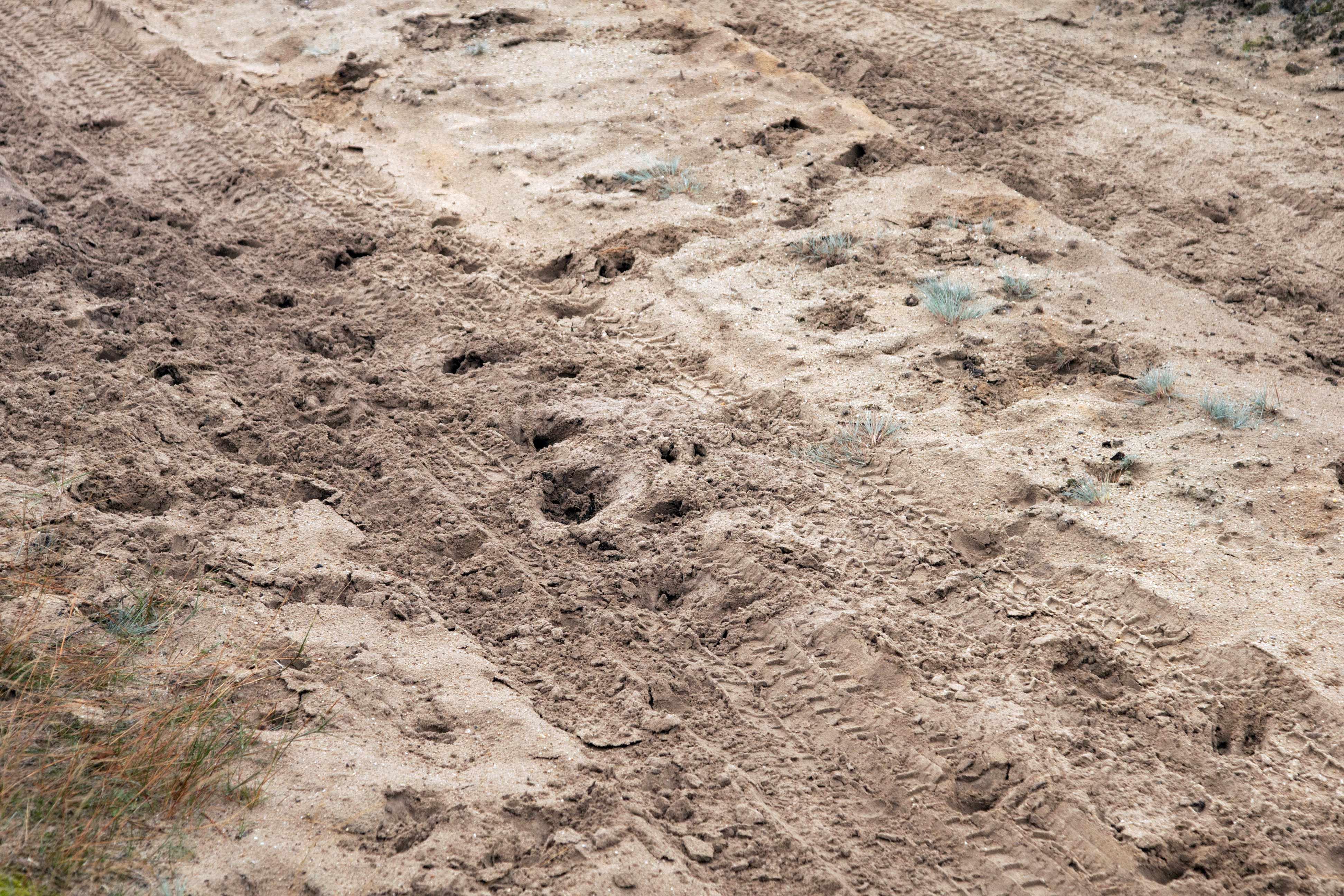 Sporen in het zand bij de insprong aan de Deelenseweg, gefotografeerd buiten het hek van De Hoge Veluwe op 17 oktober 2015 – Foto: ©Anja Arentzen