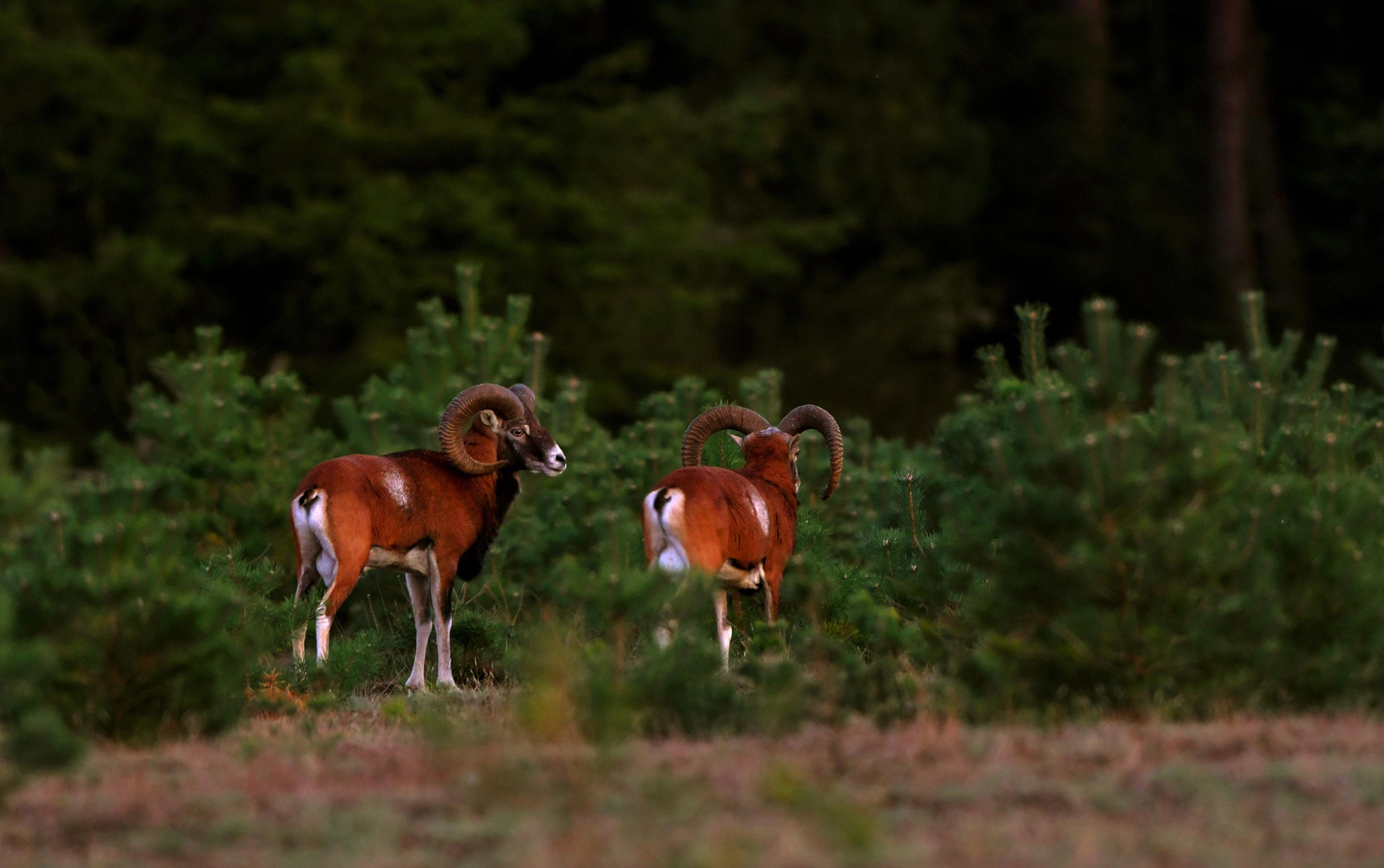 Ze waren met z'n tweeën, maar trokken al snel de dekking in, helaas - Foto: ©Louis Fraanje
