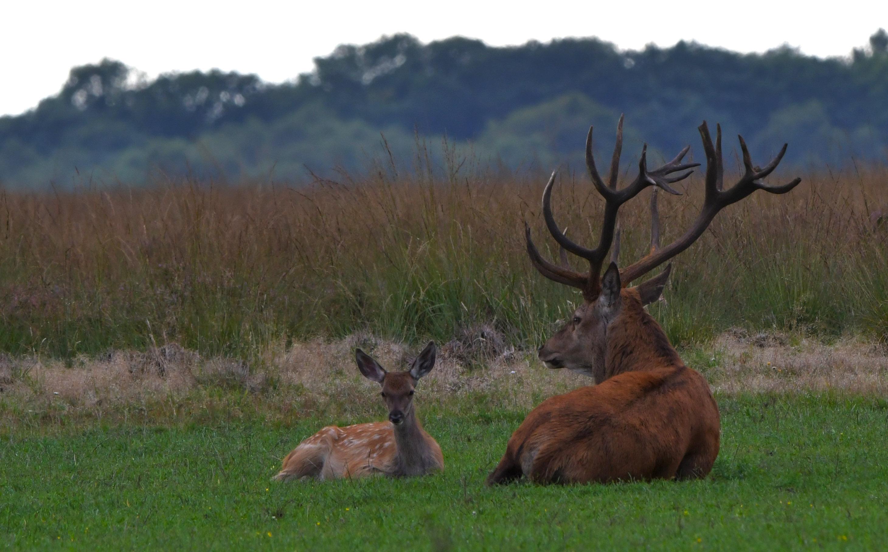 Groot en klein gebroederlijk naast elkaar op het Reemsterveld - Foto: ©Louis Fraanje