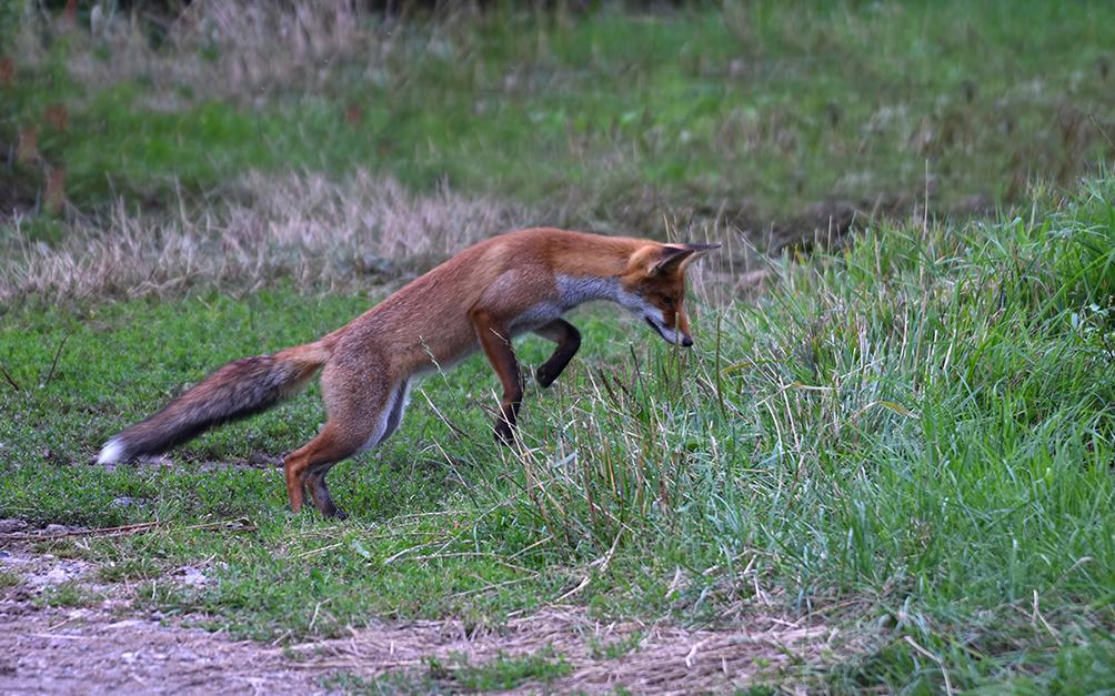 Ook bij deze volgende sprong is het meteen weer 'raak' – Foto: ©Louis Fraanje