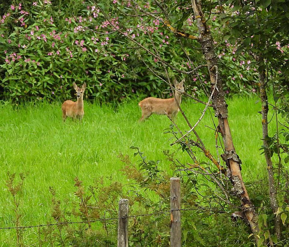De tweeling Forrest en Gump in het weitje achter het huis - Foto: Foto: ©Susa Bobke